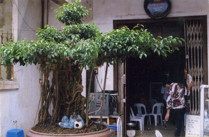 Hành trình từ bụi cây dại đến siêu phẩm 'mâm xôi con gà' Hanh-trinh-tu-bui-cay-dai-den-sieu-pham-mam-xoi-con-ga