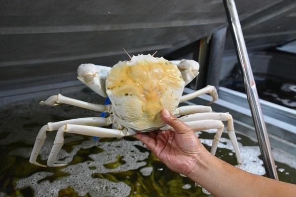 Ăn 1 con cua lạ giá 1 chỉ vàng, ngả mũ chơi sang của nhà giàu Việt