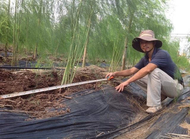 Nam Định: Lãng tử bỏ lương nghìn đô về làng trồng...'rau vua'