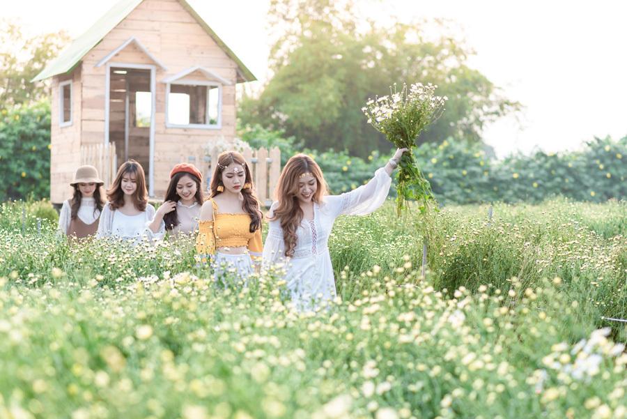 Giới trẻ Hà thành rạng rỡ check in tại cánh đồng cúc hoạ mi