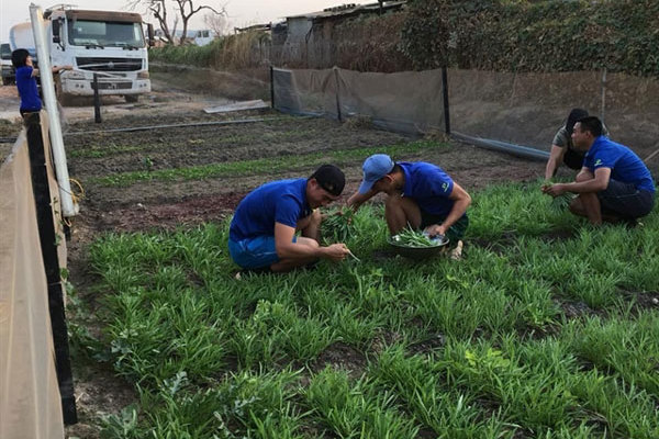 Vietnamese peacekeepers make barren Bentiu greener