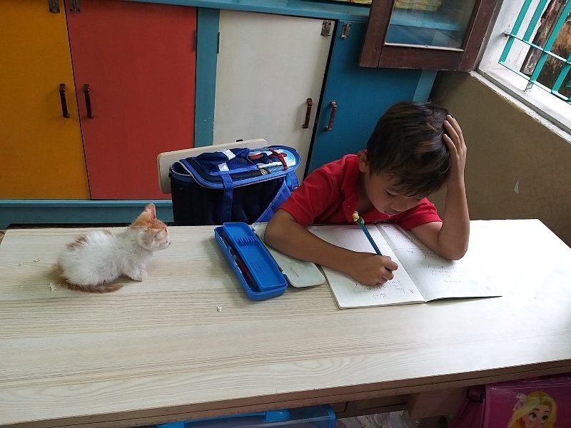 Học sinh lớp 1 mang mèo cưng đến lớp và món quà của cô giáo