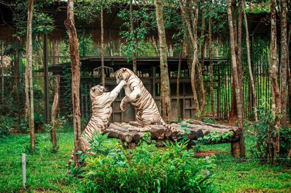 Vinpearl Safari đăng cai hội nghị bảo tồn và phúc trạng động vật lớn nhất ĐNÁ