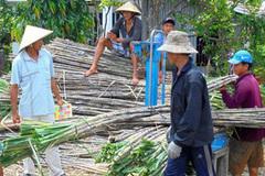 Vietnam's sugar industry in serious decline