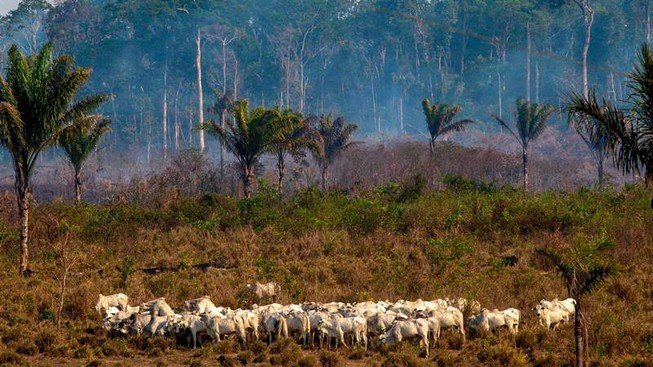 phá rừng,amazon