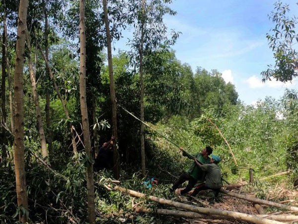 Manage land,restructuring of agro-forestry