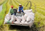 Vietnam's rice price surprisingly low despite high quality