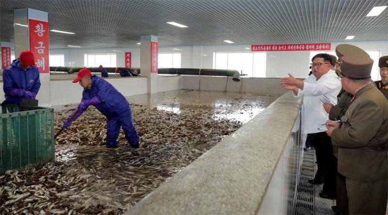 Kim Jong Un thị sát nhà máy cá, gay gắt phê bình cấp dưới
