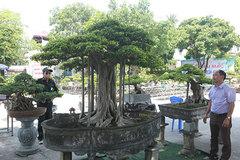 """Chiêm ngưỡng """"chùa Đồng"""" dưới bóng cây sanh tiền tỷ"""
