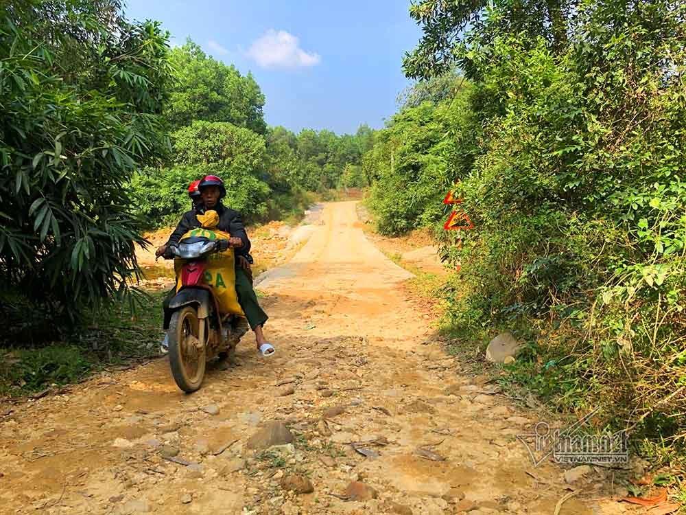 Trăm cây hoa ban mọc dọc đường 16 tỷ, TP Cẩm Phả không biết ai trồng