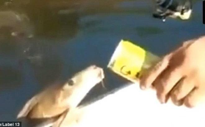 Quá là kỳ lạ: Cá lao lên mặt nước hàng chục lần há mồm để đớp bia