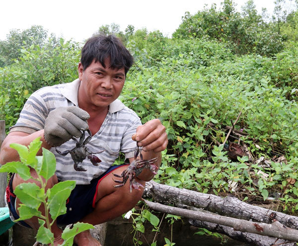 Breeding aquatic species in mangrove forests reaps high income
