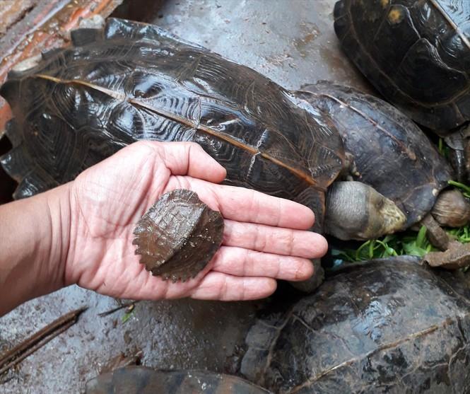 nuôi rùa,rùa quý