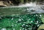 Dòng sông luộc chín mọi sinh vật rơi xuống