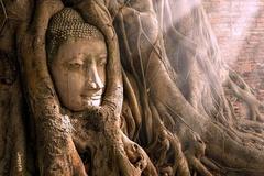 Tượng mặt Phật 700 tuổi ẩn mình trong rễ cây ở Thái Lan