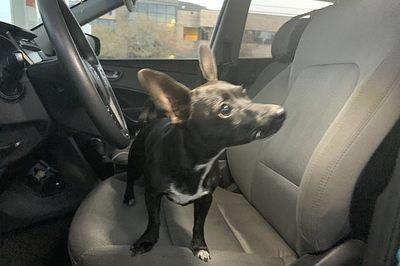 Chủ phát hoảng khi chó tự lái ô tô ra đường đông đúc