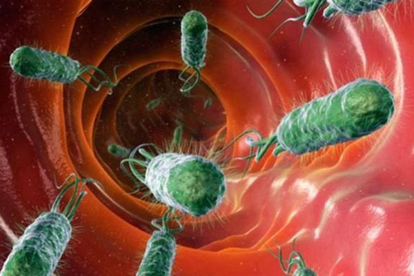 6 hành động khiến vi khuẩn HP gây ung thư sợ hãi, tránh xa