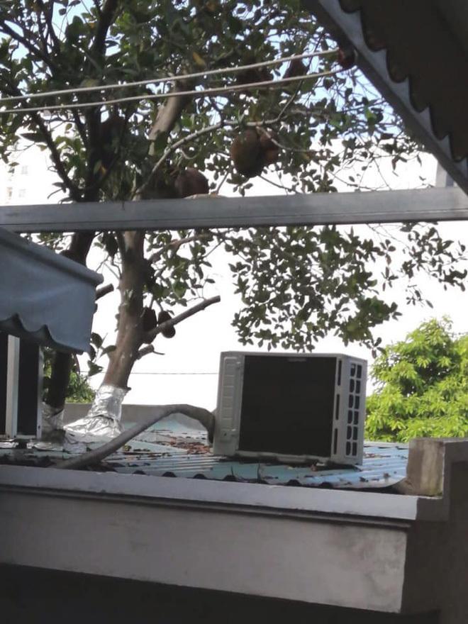 Xôn xao hình ảnh cây mít sai trĩu quả mọc giữa văn phòng