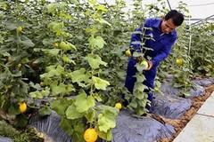 Ninh Bình tổng kết 10 năm xây dựng nông thôn mới