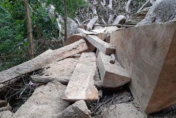 Dak Lak investigates forest destruction