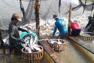 Vietnam's catfish now has to compete fiercely in world market