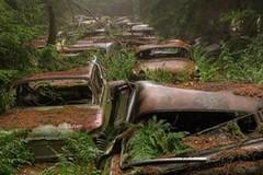 Khu rừng bí ẩn đầy xe hơi tại Bỉ