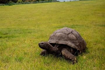 Bí ẩn những sinh vật sống 'thọ' nhất thế giới