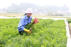 Quảng Ninh nhắm đích tỉnh nông thôn mới vào năm 2025