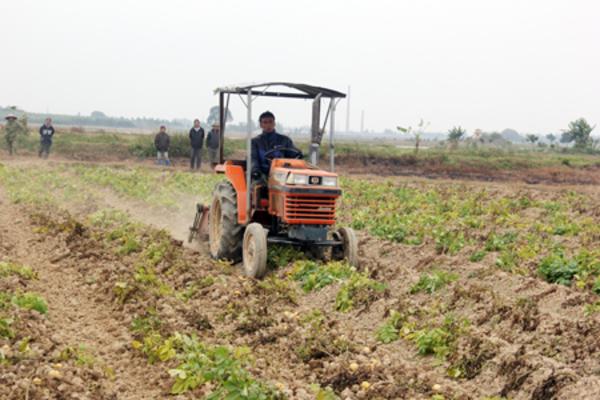 Nông thôn mới ở Hưng Yên: Điểm nhấn từ tái cơ cấu nông nghiệp