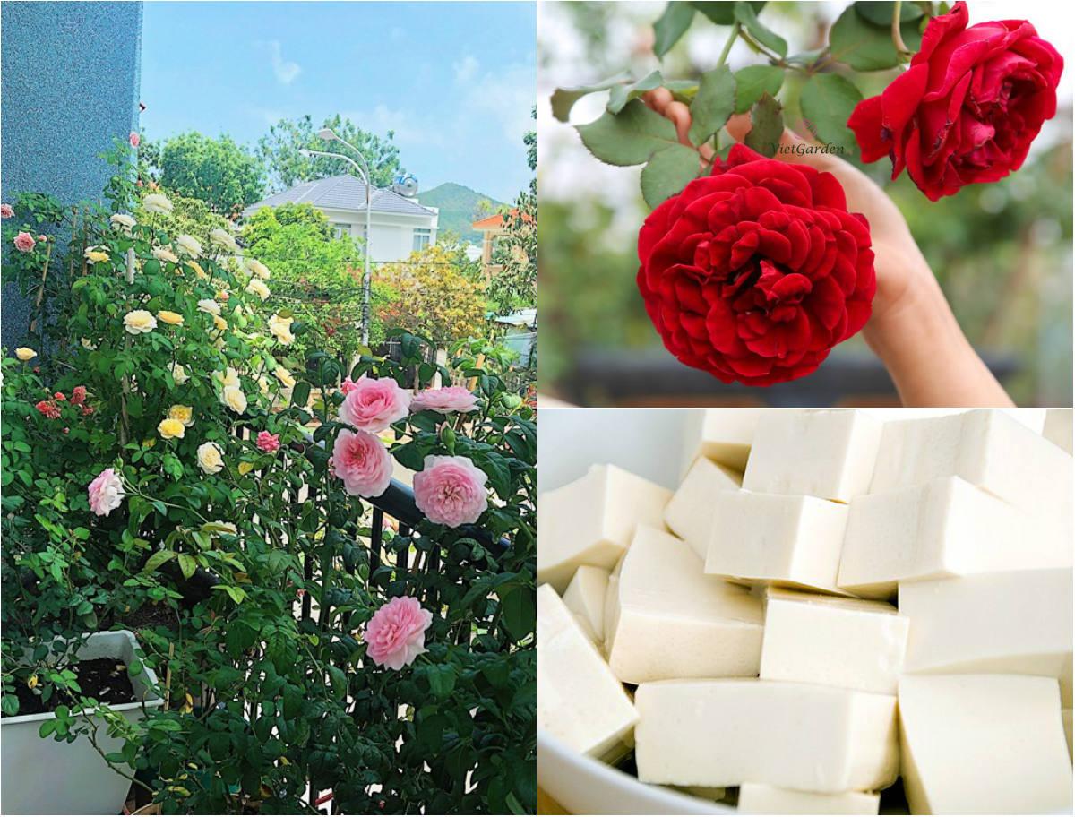 Kỳ công người đẹp mê hoa, bón cân đậu phụ ra được bông hồng xinh