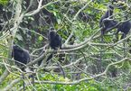 Quang Binh seeking ways to protect rare langurs