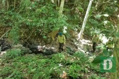 Quang Binh keeps losing forest rangers due to low pay