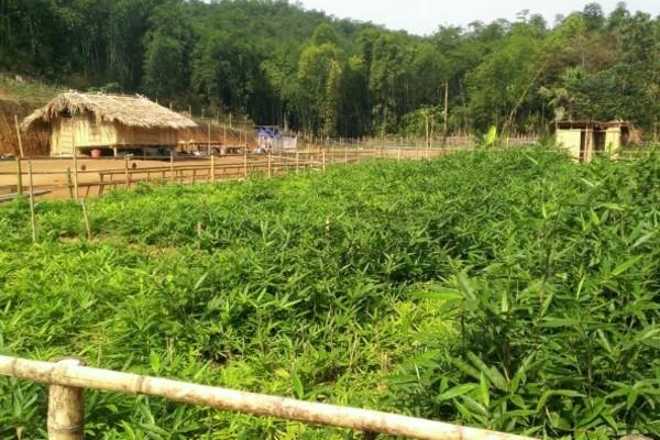 Xã Tam Lư sớm có nông thôn mới nhờ khơi dậy tinh thần tự lực, làm chủ của người dân