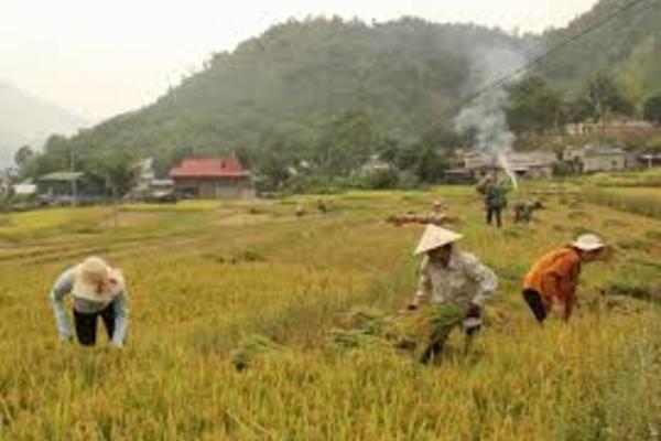 Nông dân Mường Tè thi đua xây dựng nông thôn mới
