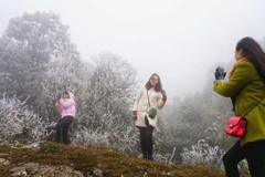 Frost forecasted to hit VN northern mountainous areas