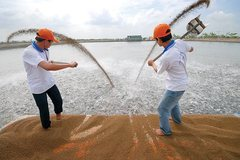 Vietnam's catfish export price drops