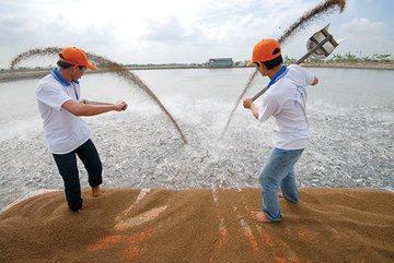 Vietnam's catfish export price drops