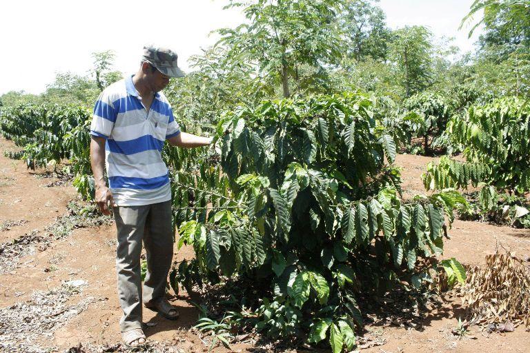 Khao khát thoát nghèo, nông dân nỗ lực sản xuất kinh doanh giỏi