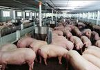 Official warns of illegal pork imports from Cambodia, Thailand