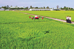 Knowledge mismatch hinders IT in agriculture