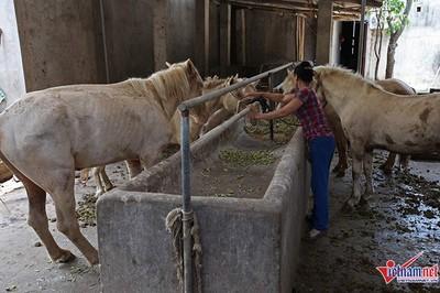 Hơn 2,3 triệu lao động nông thôn được học nghề nông nghiệp
