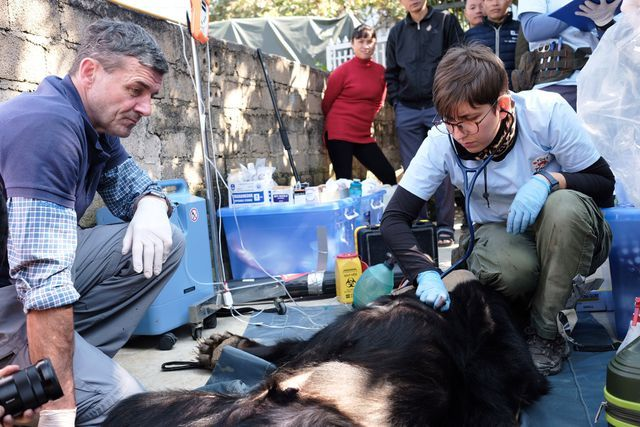 Asiatic black bear rescued after being kept for 30 years