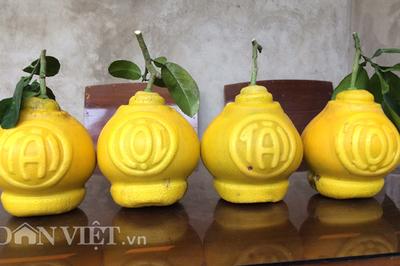 9x xứ Lạng 'chế' loại bưởi lạ chưng Tết khiến khách mê quên lối về