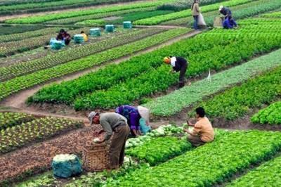 Vai trò tích cực của Hợp tác xã trong kết nối nông thôn, xóa đói giảm nghèo