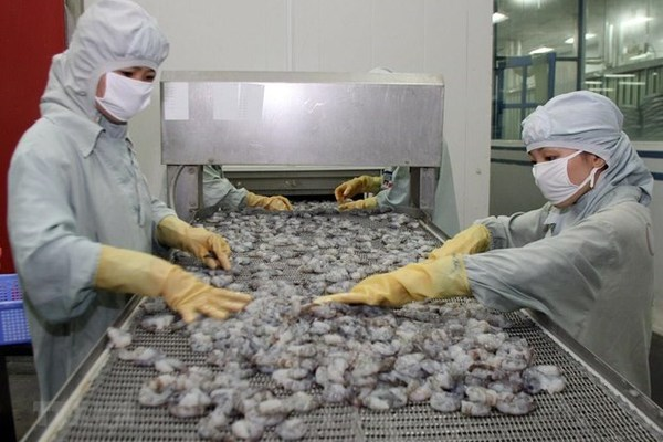 Shrimp exports slide further in 2019, better outlook expected next year