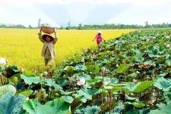 Lợi nhuận tăng thêm 10.672 tỷ đồng từ chuyển đổi cây trồng