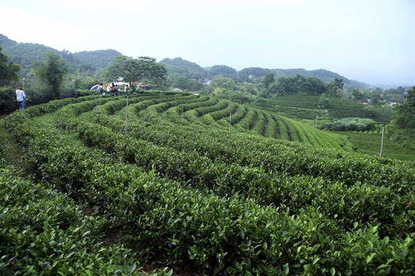 Developing raw material areas essential for Vietnam's agricultural growth
