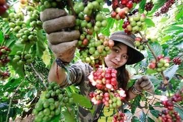 Third Vietnam Coffee Day to begin this weekend