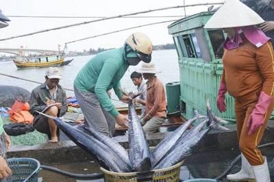 Bình Thuận: Hỗ trợ ngư dân nghèo đánh bắt xa bờ