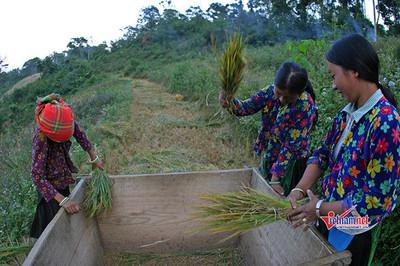 Nghệ An: Phụ nữ thi khởi nghiệp, vươn lên làm giàu